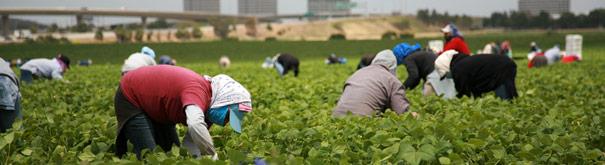 Wanita dalam Pertanian. Periksa hukum perburuhan, upah minimum, gaji dan karir di Gajimu.com